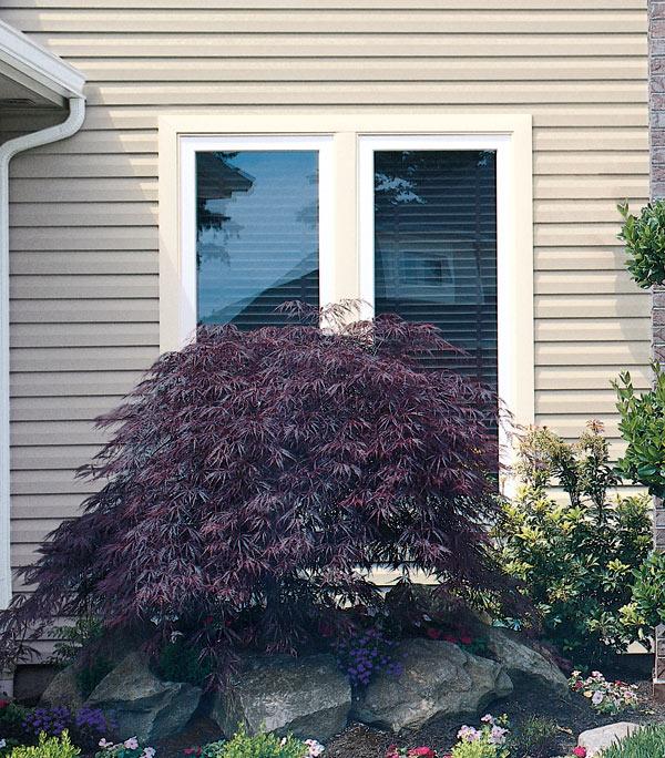 denver-home-window-tinting-decorative-window-film
